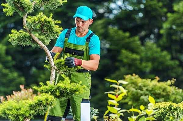landscaper trimming trees and pruning bushes