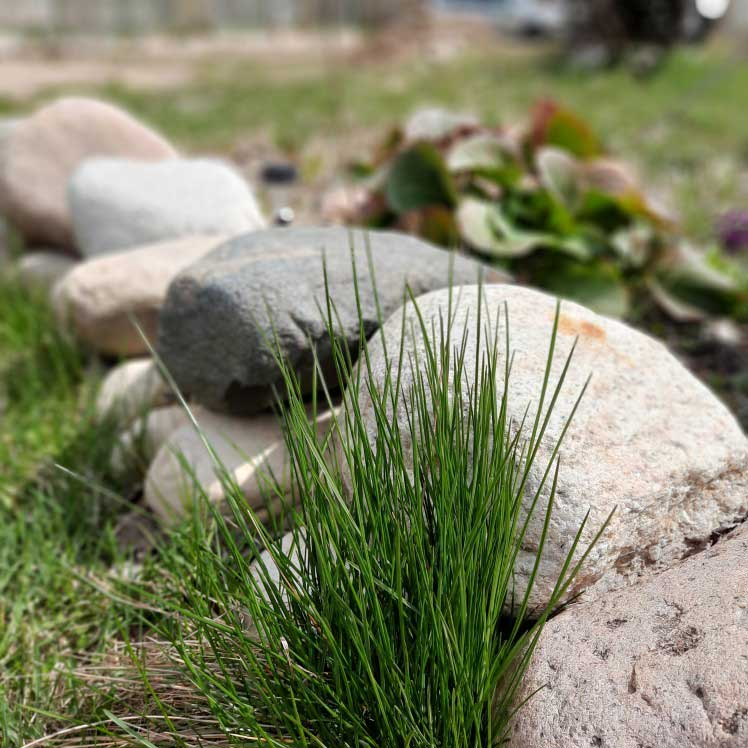 Using rocks and boulders in your yard for aesthetic landscape design