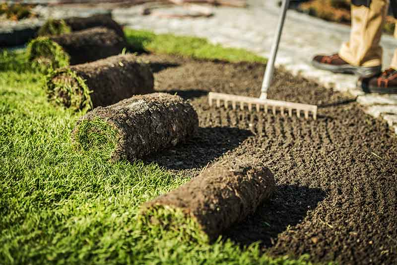 Professional Landscaper prepares for laying sod