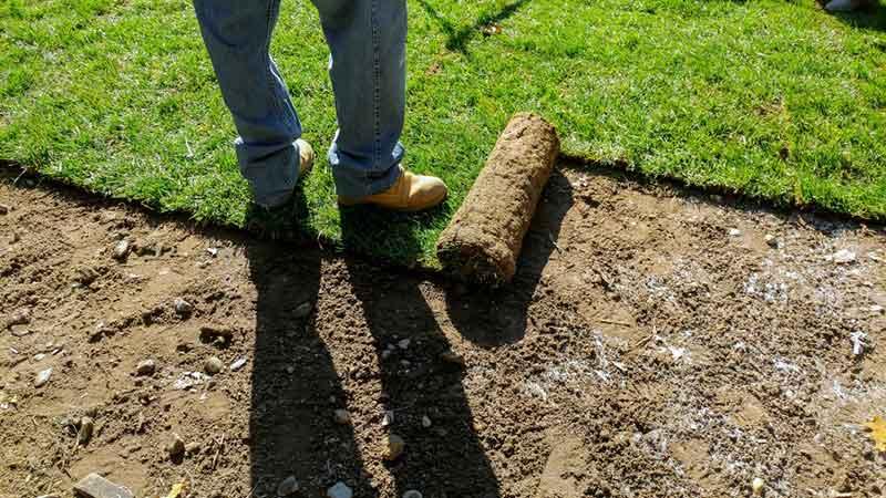 lawn installation in loveland, co