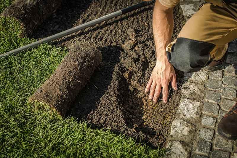 gardener installing sod in loveland, co yard