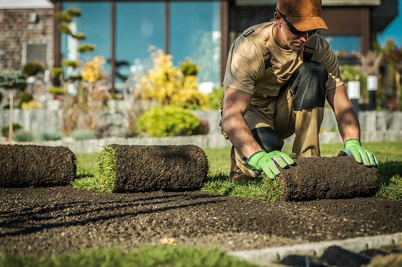landscaper installing a lawn in fort collins