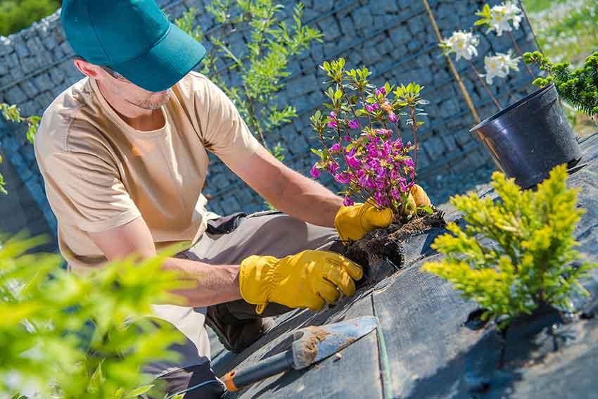 Gardener Planting Flowers in Colorado