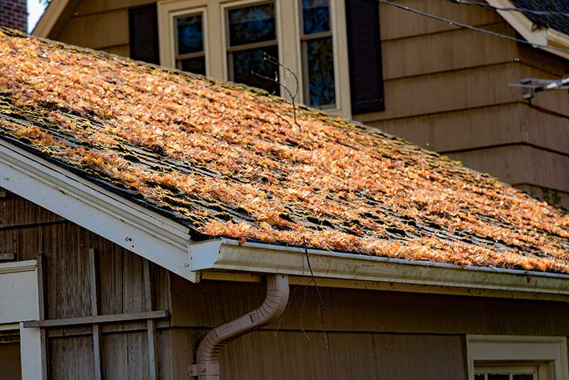 Fort Collins home with leaves on roof and in gutter