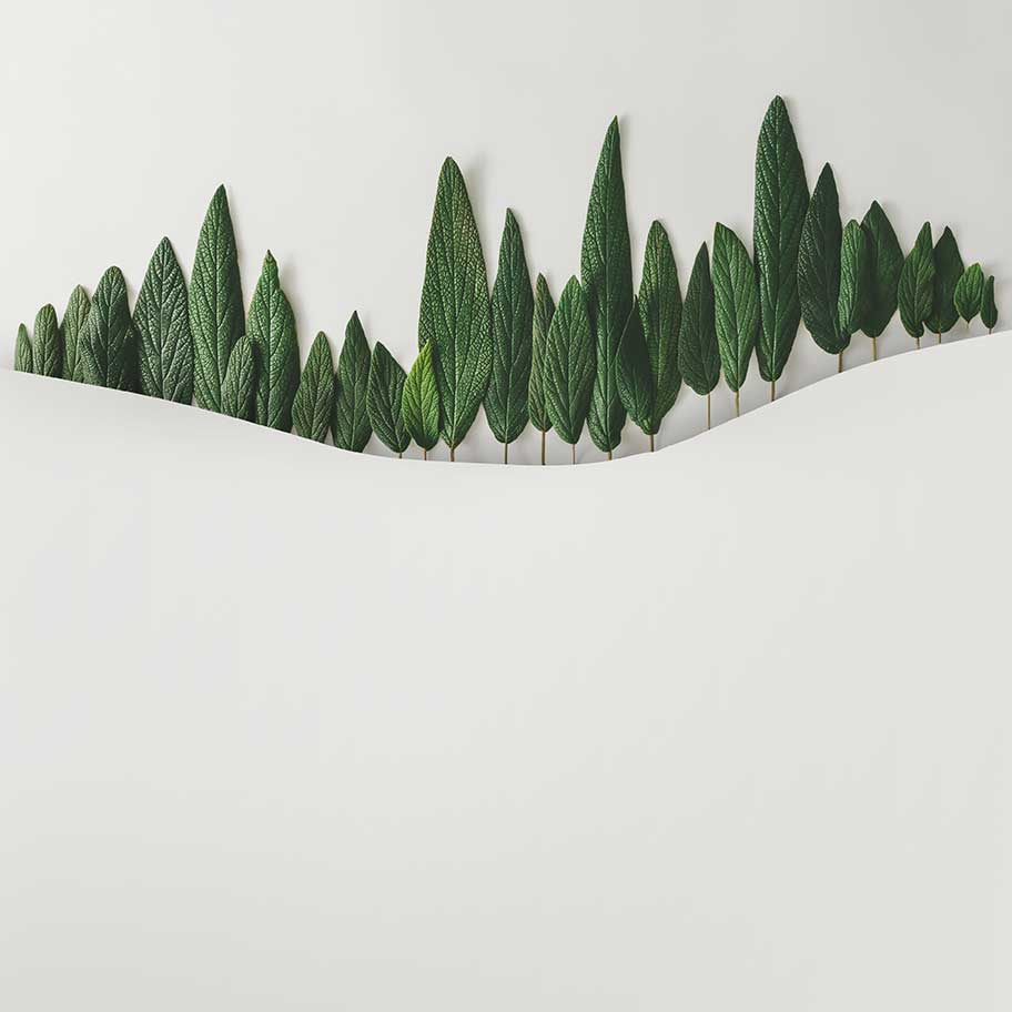 artistic impression of evergreen landscaping