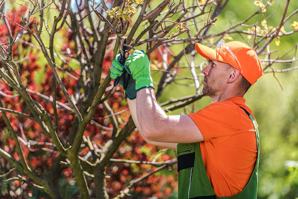 man performing a tree service of trimming in Fort Collins