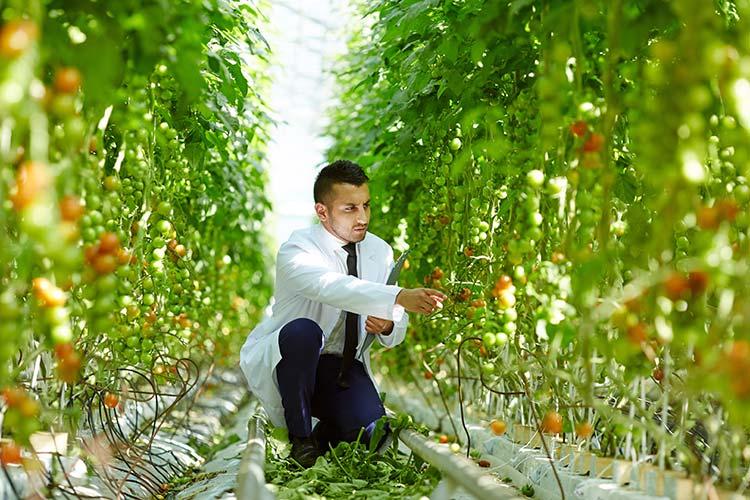 man indoor gardening in fort collins