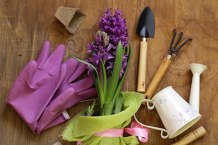 gardening tools fort collins